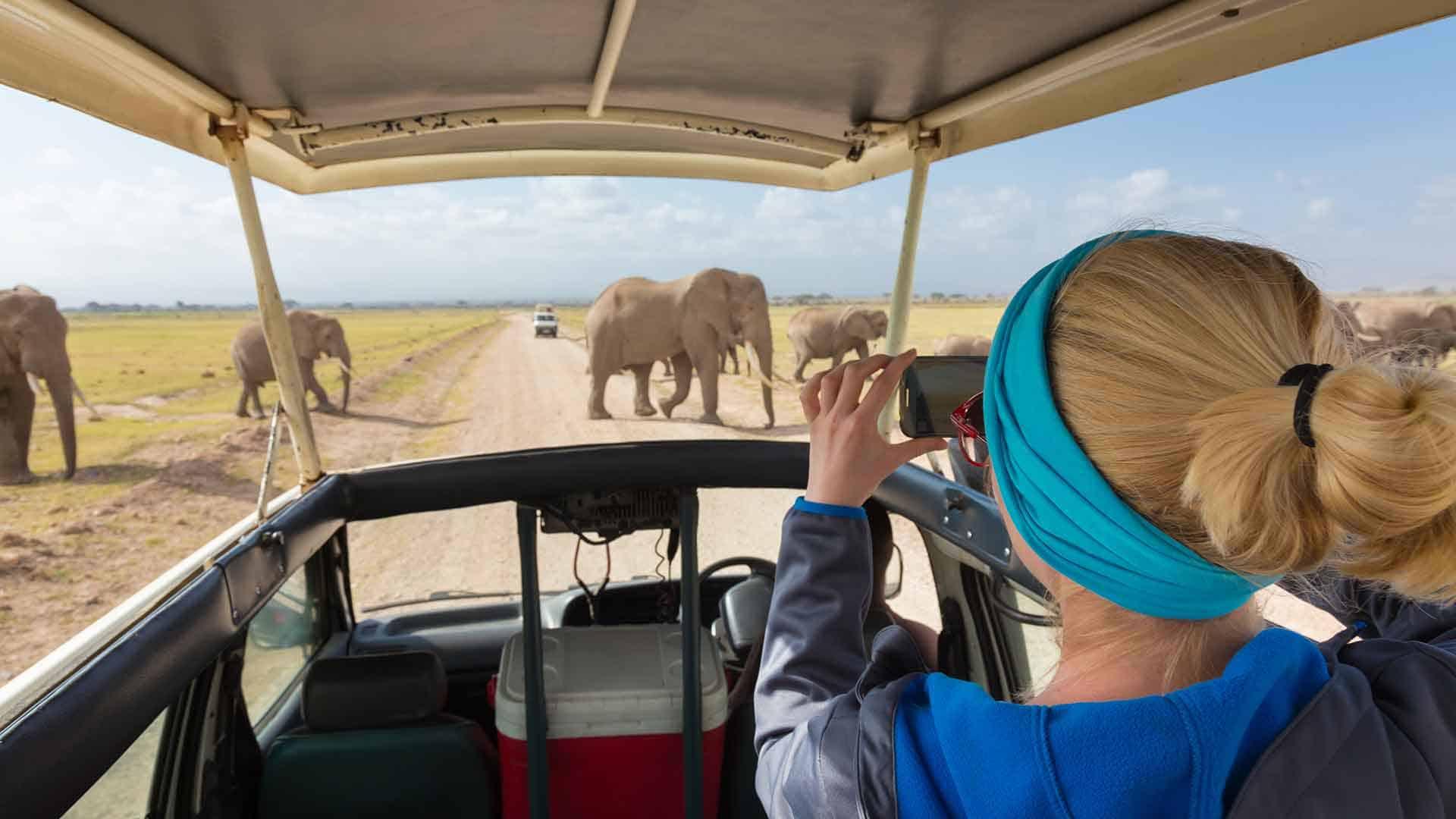 Girl on safari trip to tanzania meeting two elephants on the road