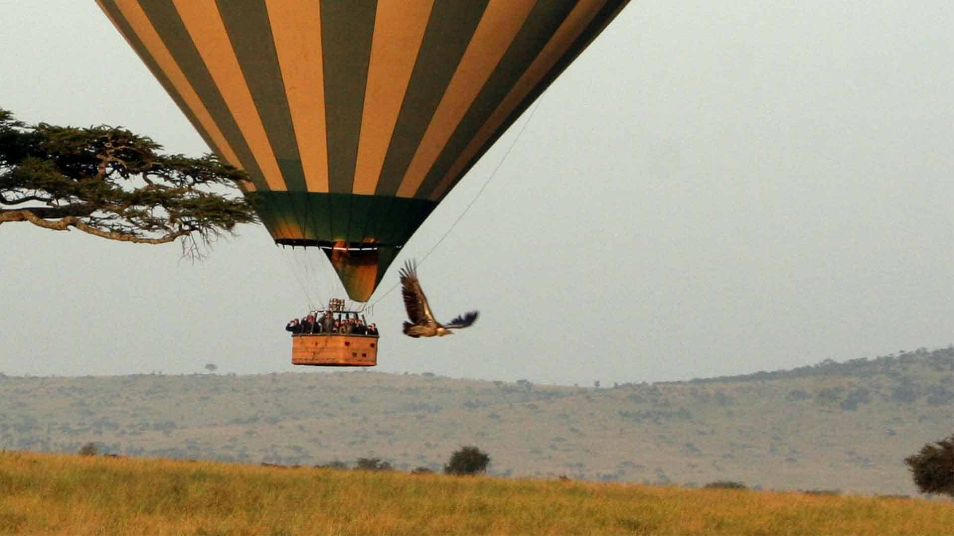 serengeti balloon extension