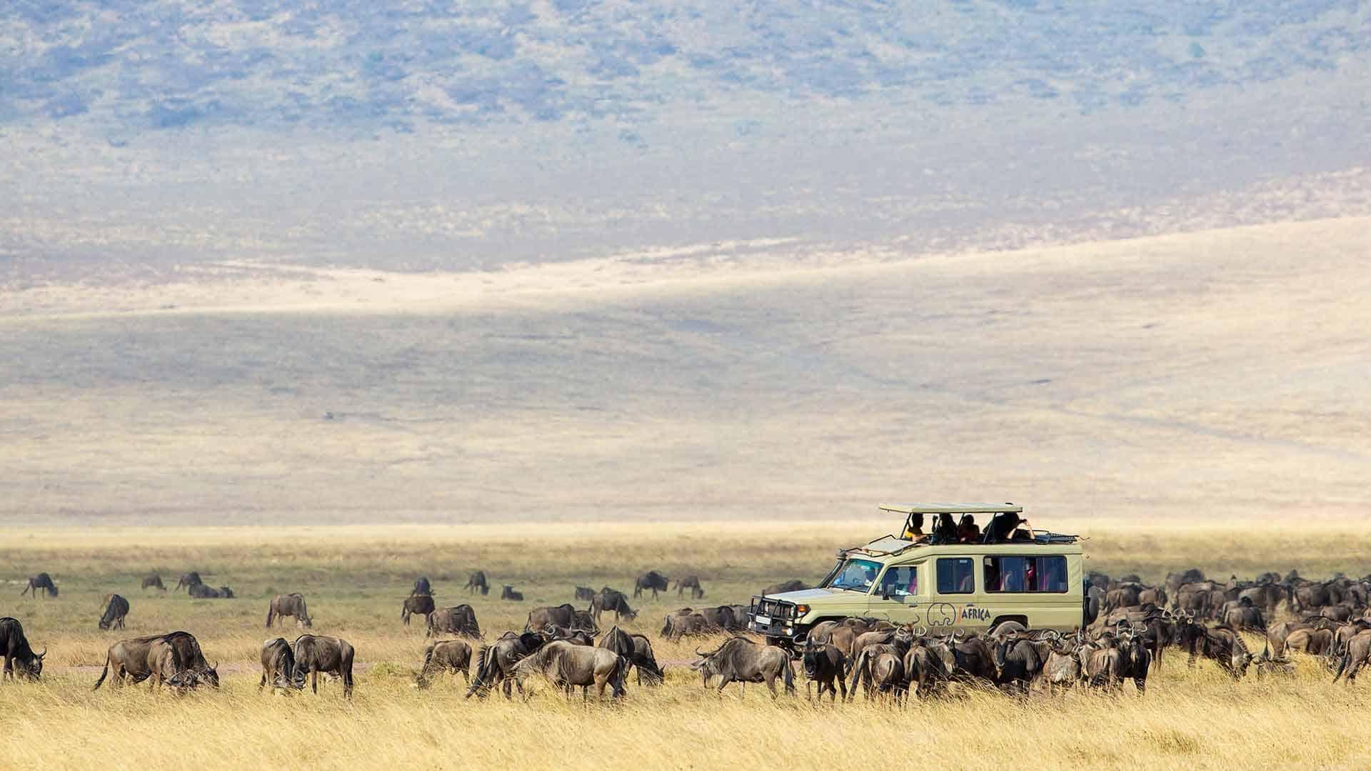 Eco tourisim in the Serengeti