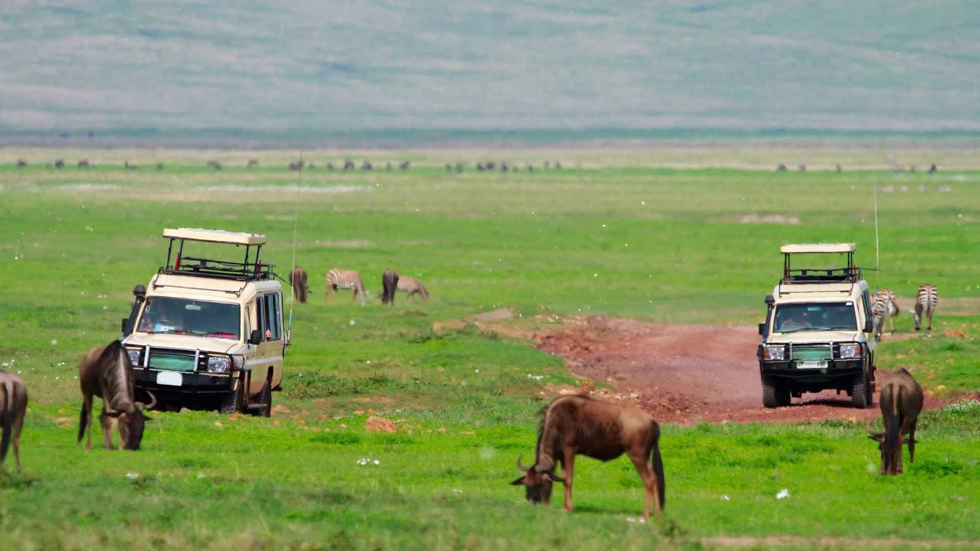 two vehicles driving through serengeti on great migration safari to africa